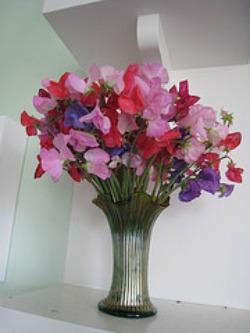 30th anniversary flower - sweet pea