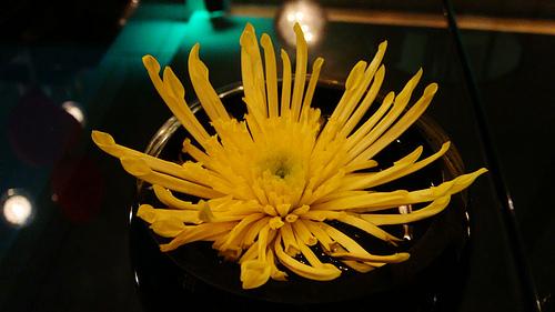 golden chrysanthemum for 50th anniversary centerpiece