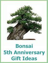 5 year anniversary gifts bonsai trees