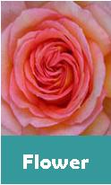 flower anniversary list