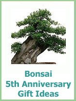 5 year anniversary gifts bonsai trees