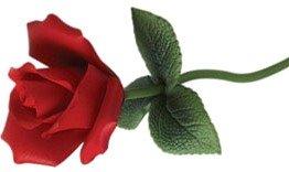 20th anniversary rose