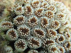 35th anniversary symbol - coral